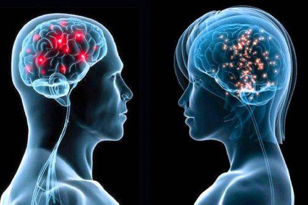 مغز زنانه مغز مردانه